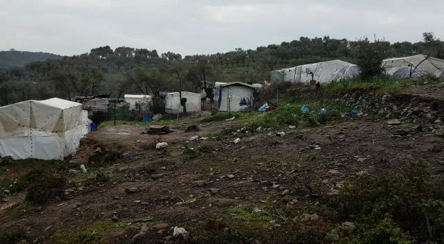 rain in the olive groves of camp moria